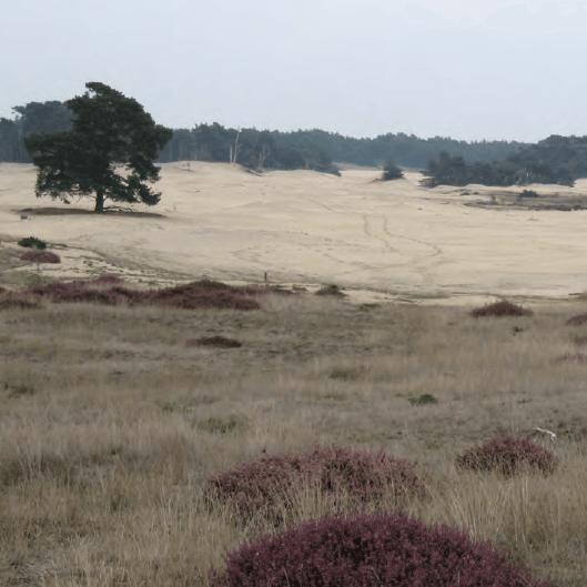 wekeromse-zand-middelpunt-van-nederland