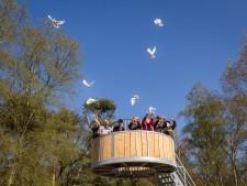 De witte duiven worden losgelaten