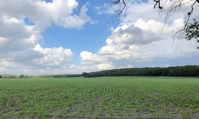 Lunterse Eng begin juni, enkele weken en regenbuien later